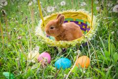 Little bunny in basket on green meadow with colorful easter eggs Stock Photos