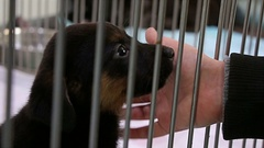 Boy hand playing with sad puppy dog in shelter giving hope to be adopted. Stock Footage