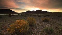 Blooming desert at sunset. Mongolia, Gobi Stock Footage