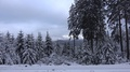 4k Narrow gauge rail in winter forest with snow in Harz mountain range 4k or 4k+ Resolution