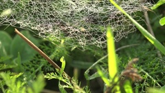 Chaotic ragged Web on background of green grass in early morning in forest 4k Stock Footage