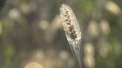 Dry grass seed on the background of web of entangled yellow autumn meadow Stock Footage