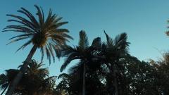 USA.Florida,Orlando 2016. Amazing tree palmas Stock Footage