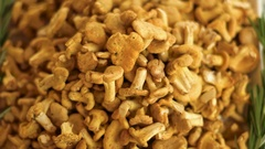 Close-up of chanterelles pile. Stock Footage
