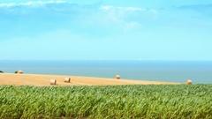 Countryside coastal scenery golden ripe wheat haystacks cornfield sky water sea Stock Footage