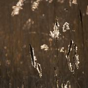 Beautiful landscape image of Winter reeds in golden early morning sunlight Stock Photos