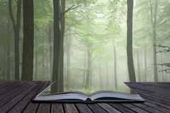 Lush green fairytale growth concept foggy forest landscape image coming out.. Stock Photos