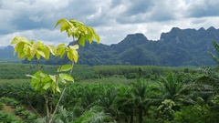 Rainforest of Khao Sok National Park in Thailand Stock Footage