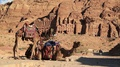 Two camels near Royal Tombs in Petra, Jordan HD Footage