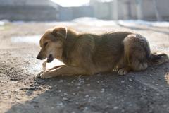 Dog gnaws a bone in nature Stock Photos
