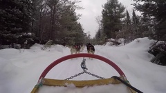 Dogsledding gopro pov from the sled view Stock Footage