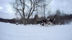 Dogsledding man with husky team slide by gopro on ground Stock Footage