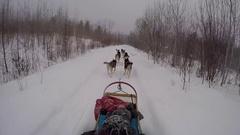 Dogsledding gopro pov on snowing trail Stock Footage