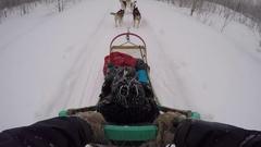 Dogsledding pov husky team braking to a stop chest mount Stock Footage