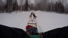 Dogsledding pov team starts moving on trail into forest while it snows Stock Footage