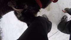 Dogsledding pov tying up dog lead chesty mount Stock Footage