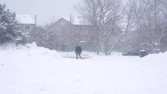 Snowy day in Toronto suburb.  Man walks small dog in blizzard.  Cars drive past Arkistovideo