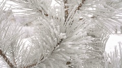 Fir branches covered with hoar frost Stock Footage