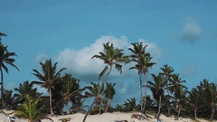 Tall palm trees on sandy shore under blue sky on sunny yet windy day Stock Footage
