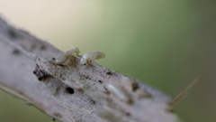 Closeup of wood borer insect. Stock Footage