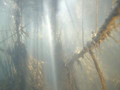 Underwater sunrays illuminate underwater spectacular underwater tree Stock Footage