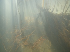 Underwater light illuminates the spectacular tree roots at the bottom of river Stock Footage