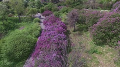Blooming botanical garden with lilac, magnolia trees, green trees, bushes Stock Footage
