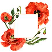 Wildflower poppy flower frame in a watercolor style isolated Stock Illustration