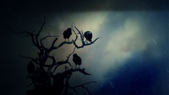 Black Ravens Standing on a Dead Tree in a Middle of a Storm Stock Footage