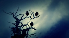 Black Ravens Standing on a Dead Tree on a Cloudy Day Stock Footage