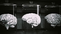 4K Human Brains in Science Laboratory Glasses Cinematic 3D Animation 3 vintag Stock Footage