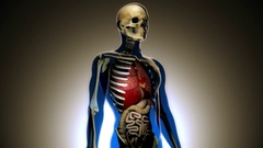 4K Internal Organs Get Sick and Skeleton in a Transparent Human Body Anatomic Stock Footage