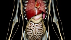 4K Internal Organs Get Sick in a Transparent Human Body Anatomical 3D Animati Stock Footage