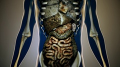 4K Sick Internal Organs in a Transparent Human Body Anatomical 3D Animation 4 Stock Footage