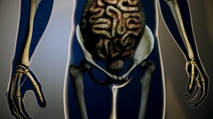 4K Sick Internal Organs in a Transparent Human Body Anatomical 3D Animation 6 Stock Footage