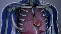 Internal Organs Get Sick in a Transparent Human Body Anatomical 3D Animation  Stock Footage