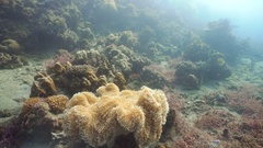 Sea anemone in the ocean Stock Footage