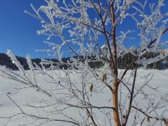 Frozen tree, ice covered trees - Winter landscapes in mountain Stock Footage